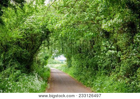 Trees and bushes along country road forming a tunnel in Southern England