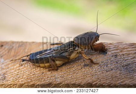 Harmful Insect, Earthy Agricultural Pest. Pest Control.