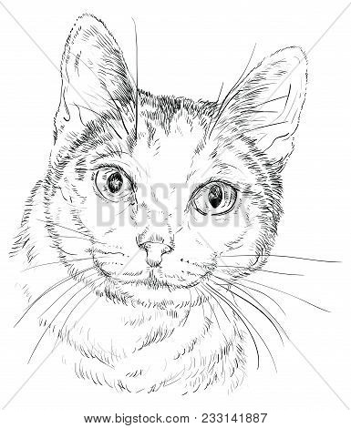 Vector Outline Monochrome Portrait Of Curious Mongrel Cat In Black Color. Hand Drawing Illustration