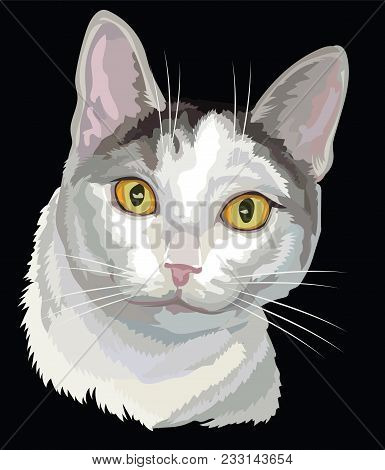 Vector Outline Colorful Portrait Of Curious Mongrel Cat In Black, White And Grey Colors. Illustratio