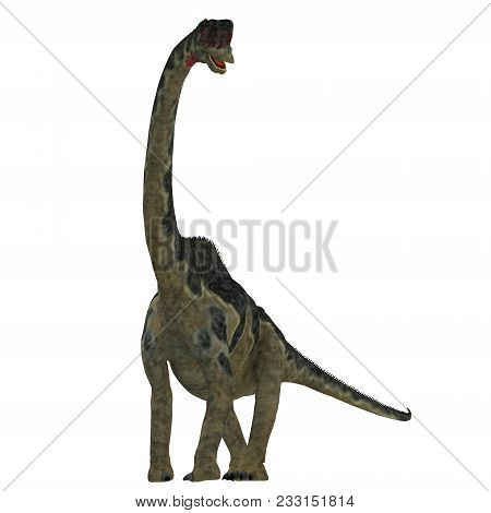 Europasaurus Dinosaur On White 3d Illustration - Europasaurus Was A Sauropod Herbivorous Dinosaur Th