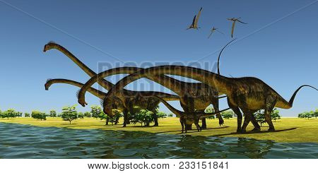 Jurassic Barosaurus Dinosaurs 3d Illustration - A Herd Of Barosaurus Dinosaurs Bend Their Long Necks