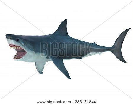 Megalodon Shark Attack Posture 3d Illustration - The Prehistoric Megalodon Shark Could Grow To Be 82