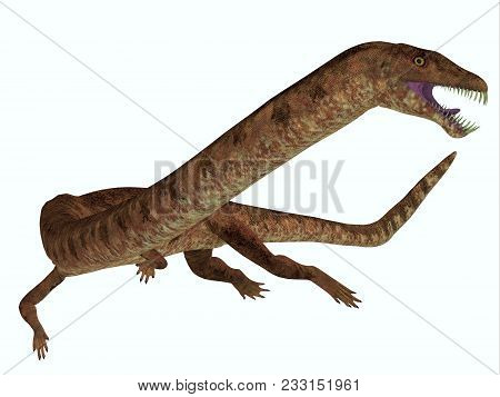 Tanystropheus Dinosaur On White 3d Illustration - Tanystropheus Was A Marine Predatory Reptile That