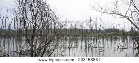 View Landscape Of Trees Standing Dead And Dry In Dirty Water Pond Effects Environment From Water Con