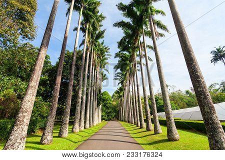 Kandy, Sri Lanka - February 21, 2017: Peradeniya Royal Botanic Gardens Located Near Kandy City, Sri