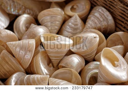 Sea shells in a basket. Selective focus on central shell