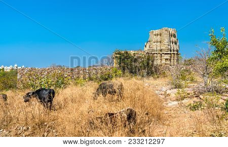 Herd Of Cows At Adbhutanatha Temple At Chittorgarh Fort. Rajastan State Of India