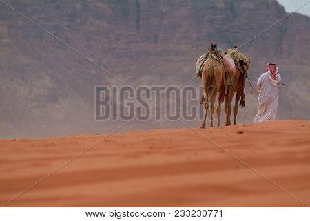 Dromedary Camels And Handler In The Beautiful Desert Landscape In The Valley Of Wadi Rum, Jordan.