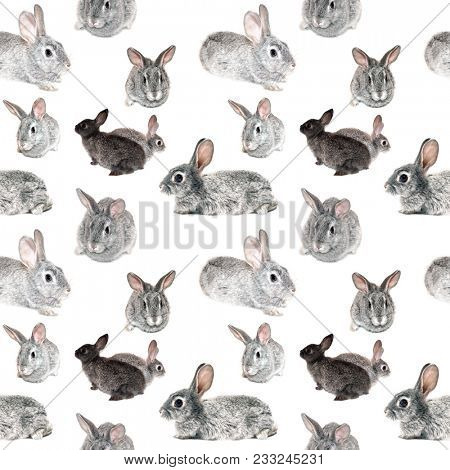 Pattern with fluffy bunny