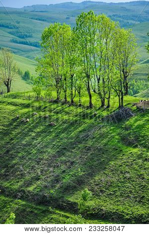 Countryside And Green Meadow With Trees