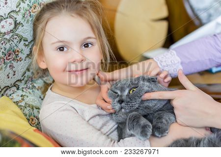 Close-up Portrait Of Cat Being Hugged By Child. Pet With Strained Smile . Kitten Patience. Best Frie