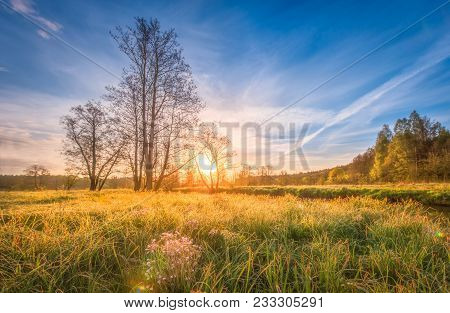 Natural Scenery Landscape On Meadow On Bright Sunrise On Spring Morning. Spring Grass, Trees And Blu