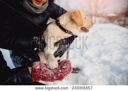 Friendship Dog. Pair Is Holding Labrador Dog Paw In Winter. The Dog Looks Into Frame And Smiles.