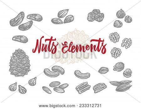 Hand Drawn Nuts Elements Set Of Almond Brazil And Peanut Variations Isolated Vector Illustration