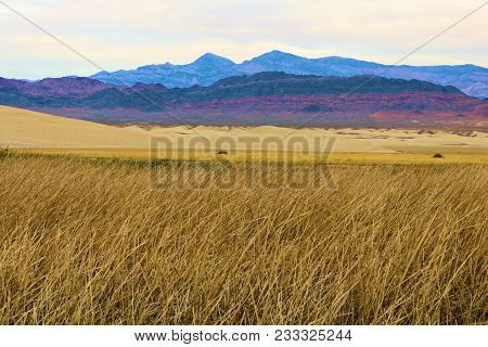 Field Of Grasslands On Wetlands With Arid Desert Terrain Beyond Taken In The Mojave Desert, Ca