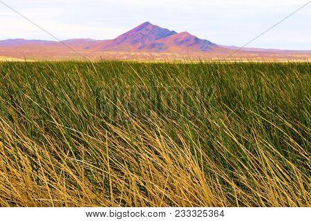 Lush Green Grasslands At A Wetland Taken In The Mojave Desert, Ca