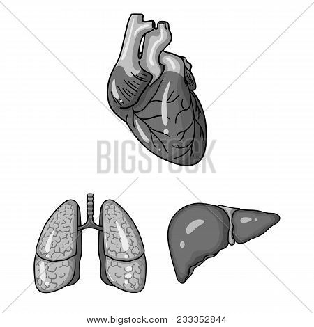 Human Organs Monochrome Icons In Set Collection For Design. Anatomy And Internal Organs Vector Symbo