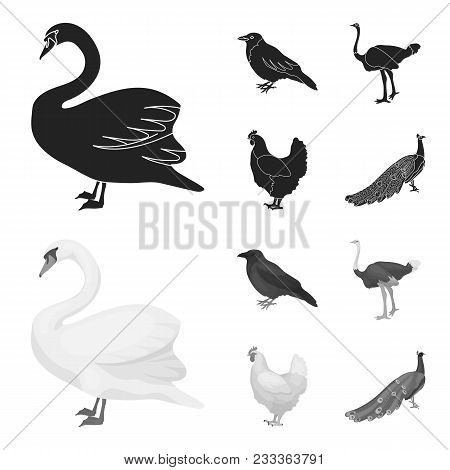 Crow, Ostrich, Chicken, Peacock. Birds Set Collection Icons In Black, Monochrom Style Vector Symbol