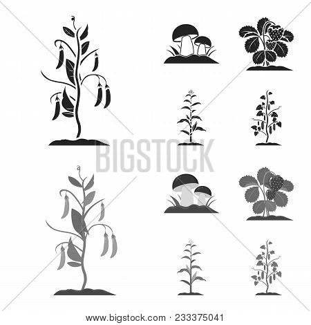 Mushrooms, Strawberries, Corn, Cucumber.plant Set Collection Icons In Black, Monochrom Style Vector