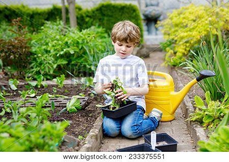 Cute Little Preschool Kid Boy Planting Green Salad In Spring. Happy Child Having Fun With Gardening.