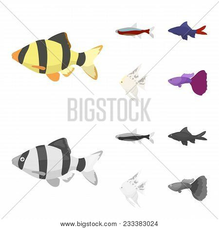 Angelfish, Common, Barbus, Neon.fish Set Collection Icons In Cartoon, Monochrome Style Vector Symbol