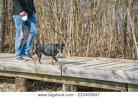 Man With Black Pincher Dog On A Wooden Trail In Sunny Spring Day