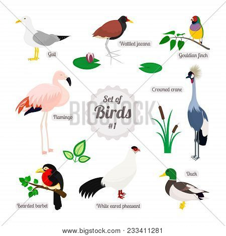 Set Of Birds. Colorful Realistic Birds. White Eared Pheasant, Duck, Gull, Bearded Barbet, Flamingo,