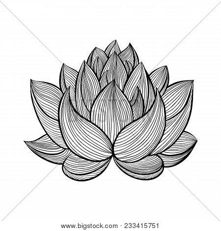 Lotus Flower. Bloomed, Buds And Leaves. Hand Drawn Contour Illustrations