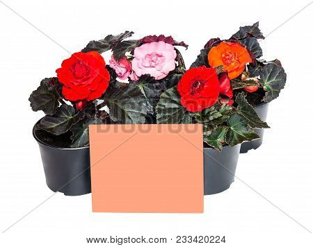 Seedlings Flowers And Pink Card For Notes Isolated On White Background