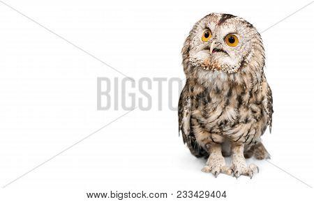 White Background One Animal Isolated On White Studio Shot Animal Themes Wild Animal Owl Eyes