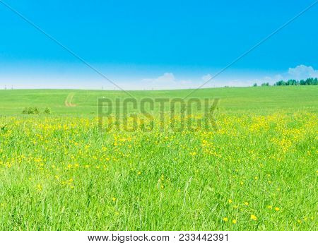 Green Plain Field Landscape