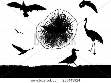 Silhouette of multiform sea birds and medusa. poster