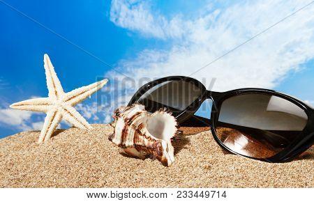 Mussel Sand Mussels Starfish Sea Star Sea Life Decoration