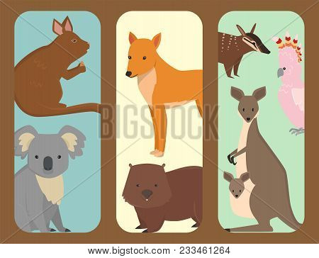 Australia Wild Animals Brochure Cartoon Popular Nature Characters Flat Style And Australian Mammal A
