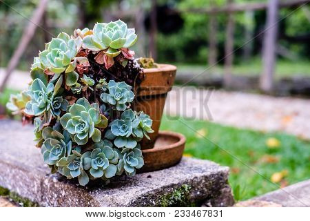 Succulent Cactus In Closeup, With Beatiful Pattern, Green Palette And Side Lighting