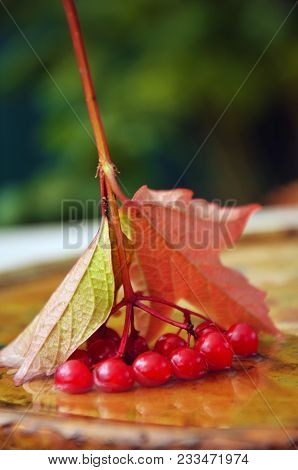 Berries Of A Mountain Ash In Water