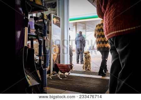 Ternopil, Ukraine- January 13, 2018: A Stray Dog Sits At The Entrance Of Modern Cafe At Gas Station