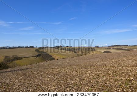 winter hilltop straw stubble fields with bare trees and hedgerows on chalky soil in the yorkshire wolds in springtime poster