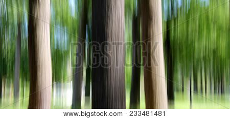 Dreamy Image Of Woodsy Scene, With Tree Trunks And Foliage, Photograph Made With Technique Known As