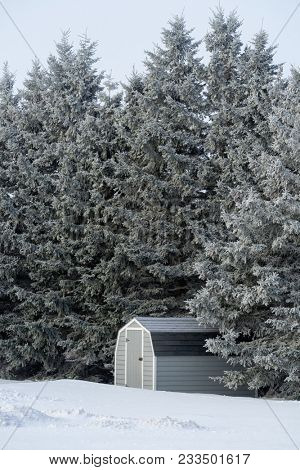Locked mini barn surrounded by tall trees.