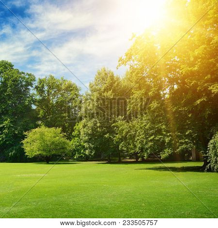 Summer sun illuminates park covered trees and green grass