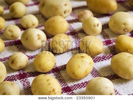 Potatoes Drying on Towel