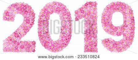 Numeral 2019 From Pink Forget-me-not Flowers, Isolated On White Background
