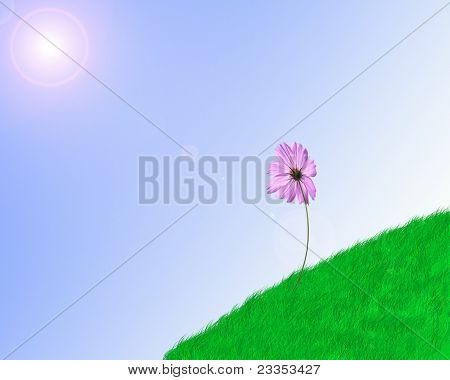 Green meadow and nice sky and flower