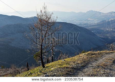 Valley Whit Lonely Isolated Tree Whit High Cliffs Behind In Croatian Mountains At Sunny Day/ Landsca