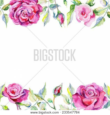 Wildflower Rose Flower Frame In A Watercolor Style. Full Name Of The Plant: Rose, Rosa, Hulthemia. A