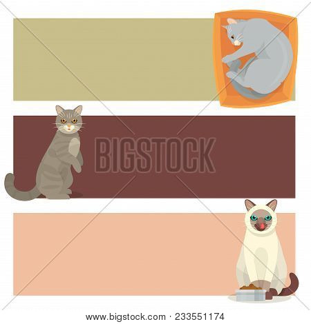 Different Cat Banners Cards Cute Kitty Pet Cartoon Cute Animal Character Set Illustration. Mammal Hu