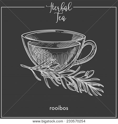 Herbal Tea With Rooibos In Elegant Glass Cup. Delicious Hot Drink With Natural Ingredient. Fragrant