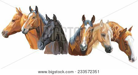 Set Of Colorful Vector Portraits Of Horses Breeds (trakehner Horse, Welsh Pony, Appaloosa Horse) Iso